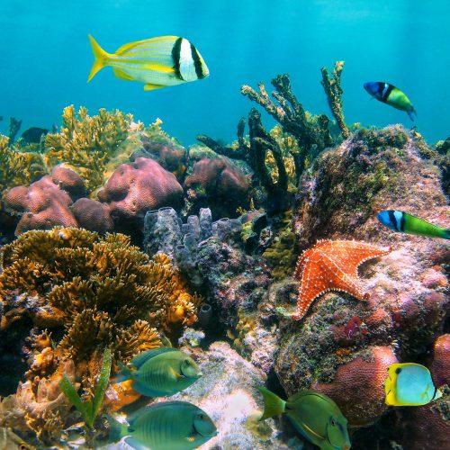 Tropische Fische in einem der weltweit spektakulärsten Unterwasserparadiese, Jardines de la Reina, Kuba